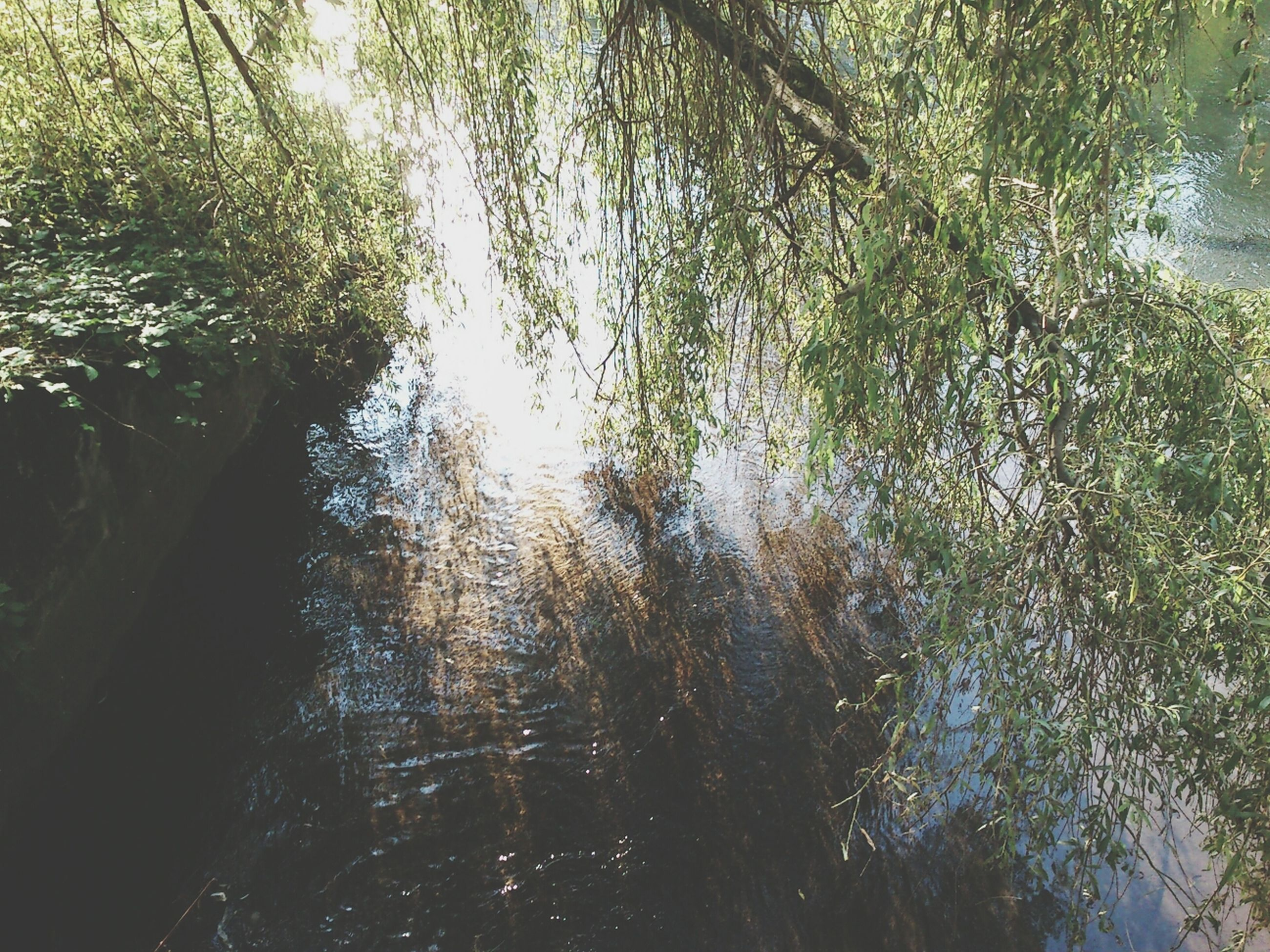 tree, water, tranquility, tranquil scene, nature, beauty in nature, growth, reflection, scenics, branch, lake, forest, tree trunk, sunlight, day, idyllic, outdoors, non-urban scene, no people, waterfront