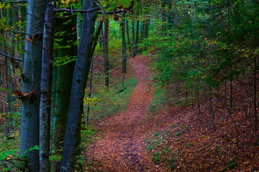 A hiking path in autumn ... Herbst Hiking Autumn Beauty In Nature Day Forest Landscape Leaf Nature No People Outdoors Scenics Tree Tree Area Tree Trunk Wald Wilderness Area