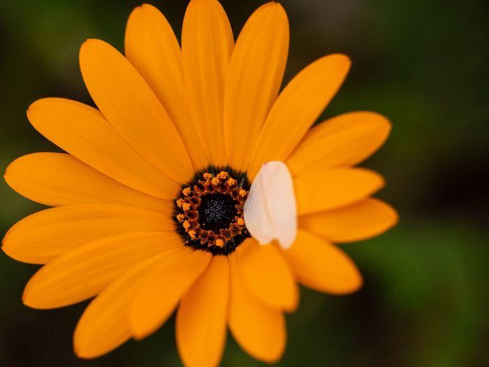 Flowering Plant Flower Freshness Fragility Petal Beauty In Nature Vulnerability