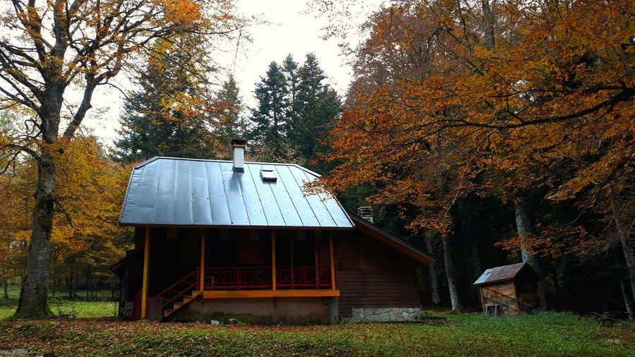 House amidst trees and plants in forest during autumn