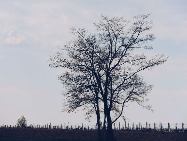 Tree Nature Sky Landscape Kragujevac Serbianature Outdoors Serbian Photos Serban Photos Dusk Nature Sunset First Eyeem Photo