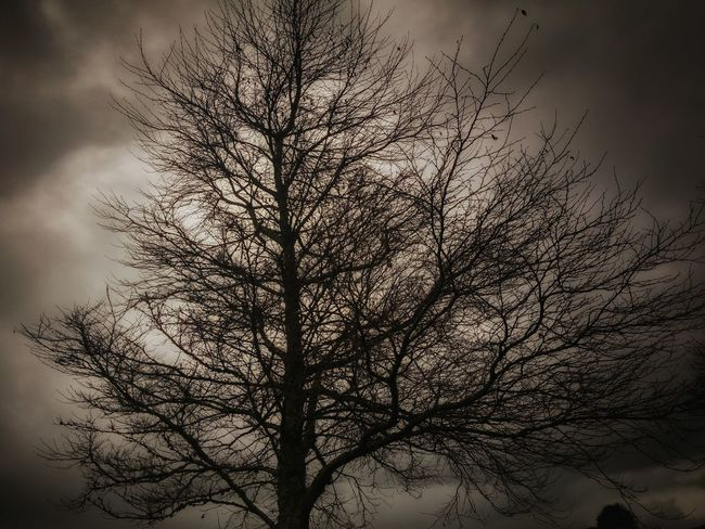 https://youtu.be/lY2yjAdbvdQ 💔 wasting time💔 Hdr_Collection Not BnW Edit Editoftheday Notes From The Underground My Darkside Women Of EyeEm Darkness And Light Dark Art Outdoors Sepia That Tree Selective Focus Music Makes Me Feel So Good Nature Photography From My Point Of View Clouds And Sky Winter Wasting Time Not Strange To Me Nature Cloud Tree Stormembracing Home Is Where The Art Is