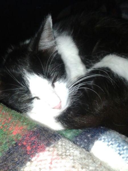 Cat Animal Cutness