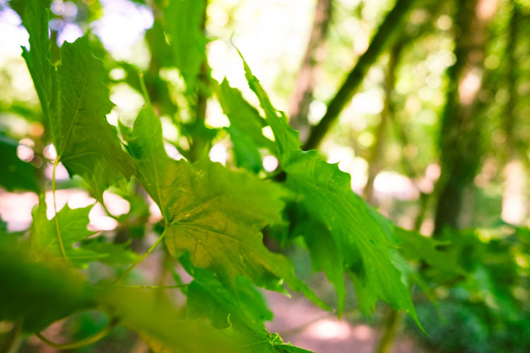 Close-up of green leaves in forest