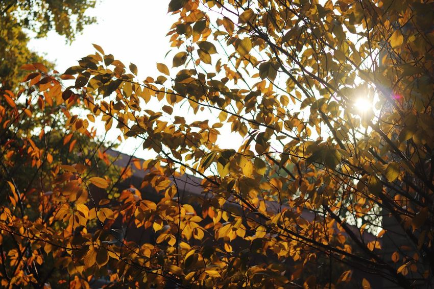 Low Angle View Autumn Sunlight First Eyeem Photo