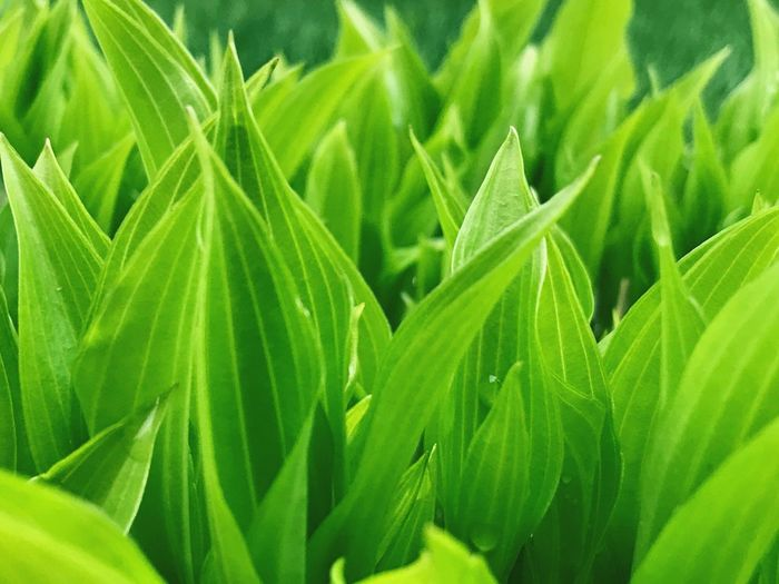 Green Color Plant Part Leaf Growth Plant Beauty In Nature Close-up Freshness Natural Pattern Outdoors No People Full Frame Drop Day Backgrounds Focus On Foreground Tranquility Sunlight Fragility Nature
