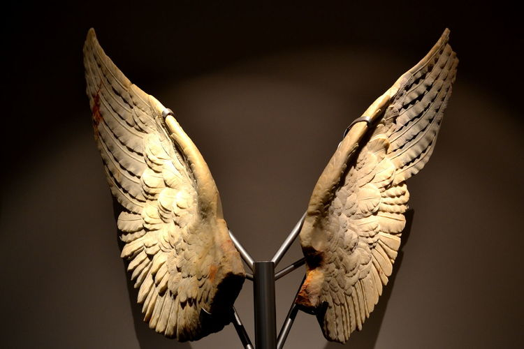 Rome Rome, Italy Wing Angel Angel Wings Animal Themes Bird Black Background Close-up Day Museum No People Outdoors Palatine Palatine Hill Rome Italy Spread Wings Studio Shot Wings