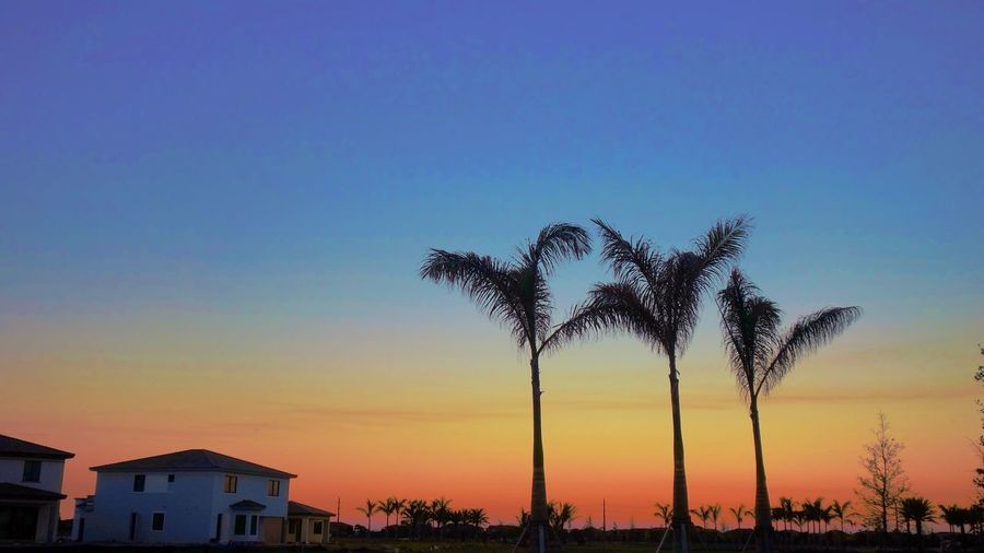 New Development Residential Building Housing Tree Sky No People Outdoors Built Structure Building Exterior Architecture Silhouette Clear Sky Nature Beauty In Nature Sunset Scenics Palm Tree Tranquility Growth Blue Day