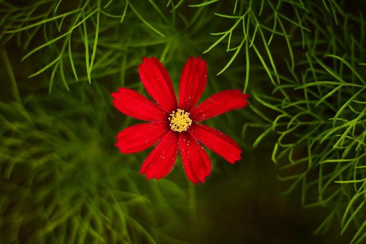 Red Flower Green Color Growth Plant Fragility Nature Beauty In Nature Outdoors Flower Head No People Close-up Leaf Grass Freshness Day