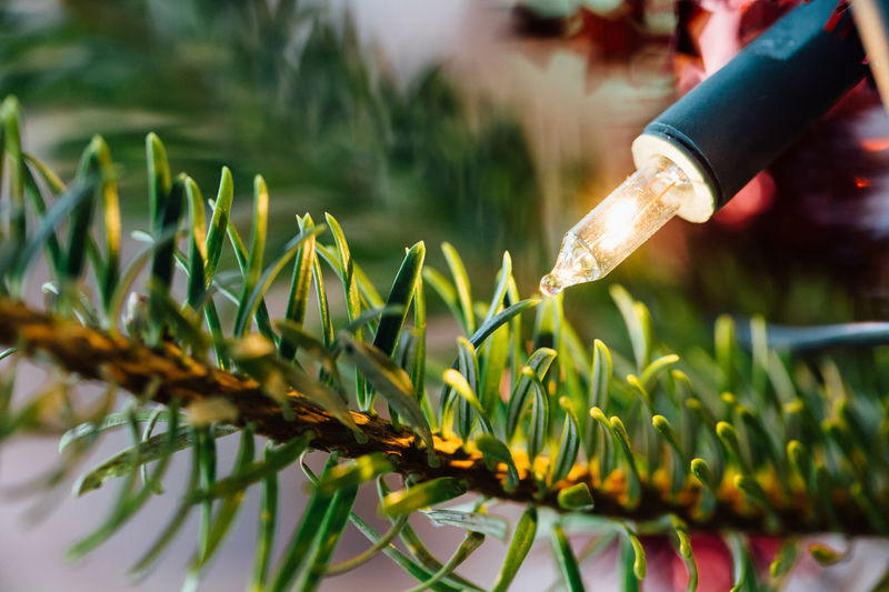 Closeup of a Christmas tree branch and electric candle. Candle Christmas Fir Tree Holidays Branch Christmas Tree Close-up Day Decoration Electric Candle Festive first eyeem photo Focus On Foreground Freshness Grass Green Color Growth Macro Nature Outdoors Plant Season