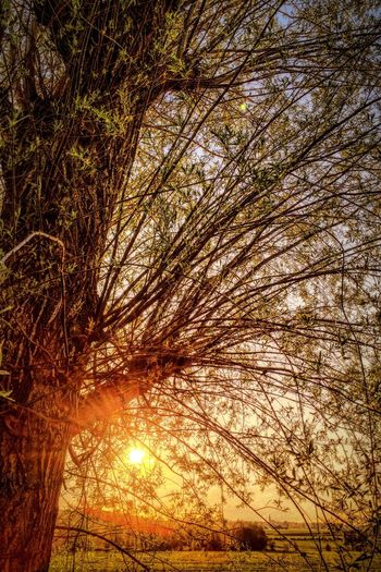 Sun Tree Sunset Nature On Your Doorstep Naturelovers EyeEm Best Shots EyeEm Nature Lover EyeEm Gallery EyeEm Best Edits EyeEmBestPics EyeEm Best Shots - Nature EyeEm Best Shots - Landscape