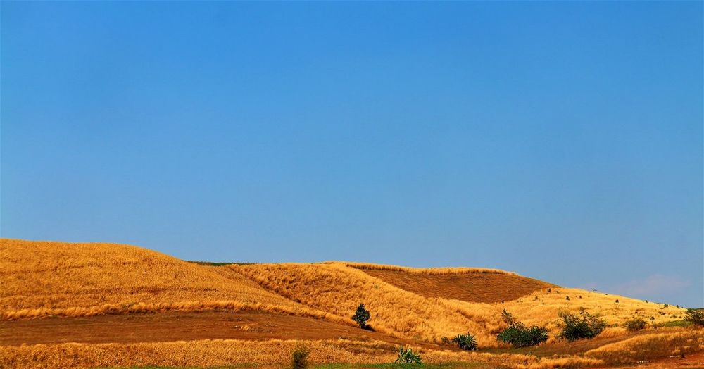 Mountain View, Corn Field, Phop Phra District, Tak Province, Thailand Environment Sky Land Landscape Blue Copy Space Scenics - Nature Nature Beauty In Nature Day Clear Sky No People Tranquil Scene Tranquility Horizon Horizon Over Land Outdoors Field Mountain Non-urban Scene Semi-arid Prairie