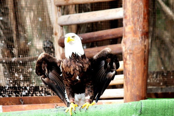 Animal Portrait Birds Eagle Fuerteventura Leading Lines Perfect Match Macro Beauty Pattern Pieces American U.S.A America Eagle Portrait Pastel Power Q