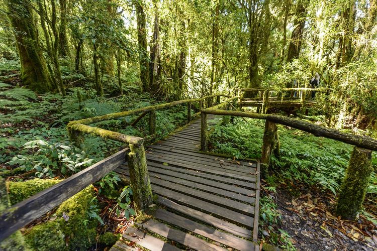 Angkha Nature Trail Tree Forest Plant Wood - Material Land Nature Tranquility No People Day Absence Empty Growth Wood Outdoors WoodLand Railing Green Color Beauty In Nature Tranquil Scene Non-urban Scene