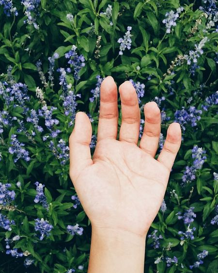 Close-Up Of Cropped Hand Holding Purple Flowers