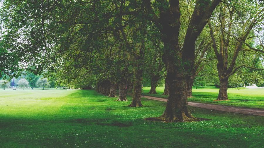 Spring n the park Tree Nostalgic  Cambridge Vintage Retro Tree Plant Green Color Grass Growth Nature Land No People Landscape Beauty In Nature Tree Trunk Environment Tranquility Scenics - Nature Day Park Tranquil Scene Field Outdoors Trunk
