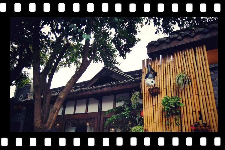 Tree Balcony