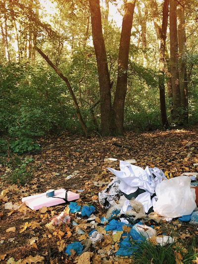 Nature's beauty fades away under garbage... Leaf Autumn Earth Conservation Action Education Dump Issues Environmental Issues Recycle Forest Wood Pollution Waste Trash Garbage Tree Nature Sunlight Plant Day No People Land Tree Trunk Growth Scenics - Nature Non-urban Scene Environment Tranquility Trunk