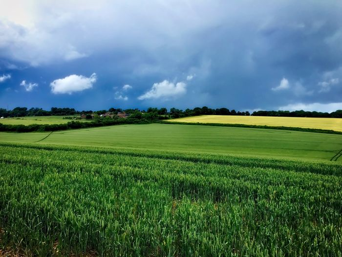 Summer in the Berkshire countryside Agriculture Beauty In Nature Cloud Cloud - Sky Cloudy Crop  Cultivated Land Field Grass Grassy Green Green Color Growth Horizon Over Land Idyllic Landscape Nature No People Outdoors Plant Rural Scene Scenics Sky Tranquil Scene Tranquility