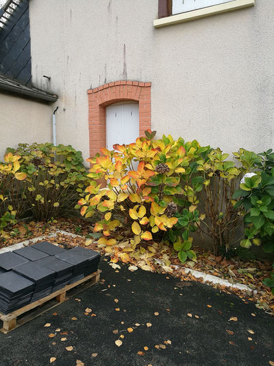 Autumn Building Exterior House And Window Leaf No People Plant Wall Yellow