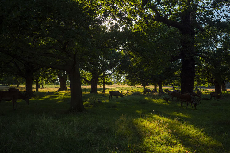 View of trees on grassy field