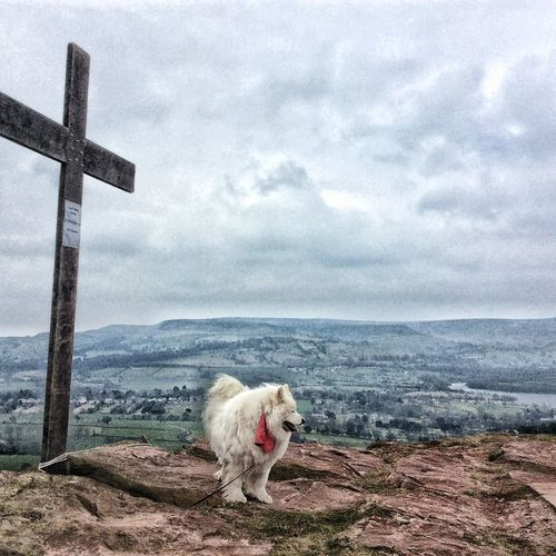 Dog standing by cross on mountain against cloudy sky