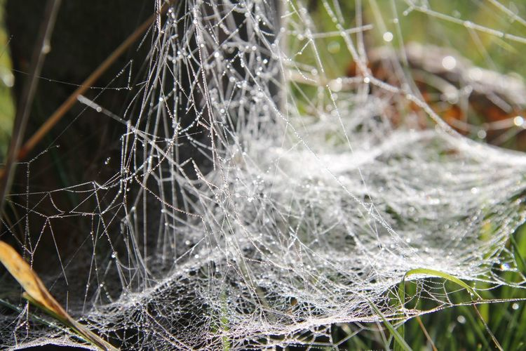 Animal Themes Beauty In Nature Complexity Day Fragility Herbst Hessen Hinterland Nature Netz No People Outdoors Spider Spider Web Spinnen Tau Tropfen