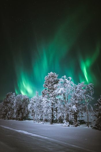 Beautiful night in Lapland Beauty In Nature Cold Temperature Winter Tree Snow Night Nature Tranquility Sky Green Color Landscape Astronomy Lapland Aurora Borealis Northern Lights Clear Sky Travel Hanging Out Freshness Outdoors Frozen Scenics Star - Space Nature_collection Exploring