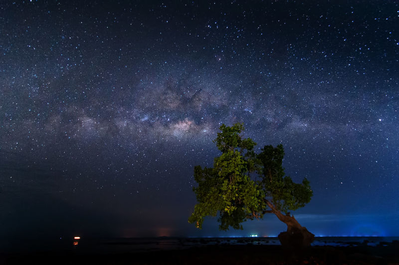 milky way rise above trees Star - Space Astronomy Night Space Galaxy Sky Scenics - Nature Beauty In Nature Milky Way Tranquility Nature Tranquil Scene Tree Star No People Plant Star Field Idyllic Constellation Outdoors Space And Astronomy
