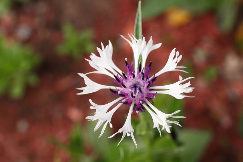 Macro Flower Flower Plant Flowering Plant Vulnerability  Fragility Beauty In Nature Close-up