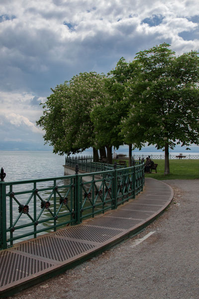 Bodensee Bodenseeregion Cloud Cloud - Sky Cloudy Friedrichshafen Friedrichshafen Am Bodensee Idyllic Nature Nature_collection Outdoors Scenics Schloßpark Friedrichshafen Sea Sea And Sky Seaside Sky The Way Forward Tranquil Scene Tranquility Tree Ufer Walkway