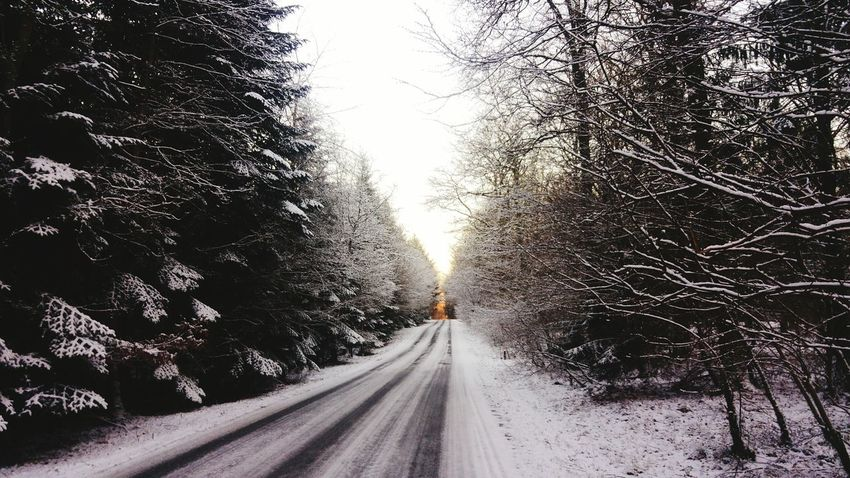 Tree Road The Way Forward Transportation Outdoors Nature No People Day Clear Sky Cold Temperature Snow Sky Beauty In Nature