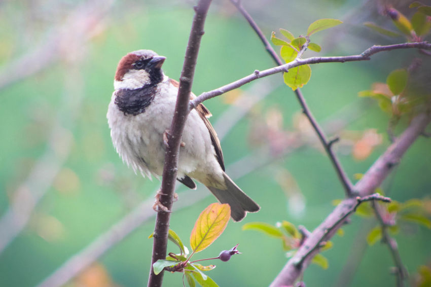 Animal Themes Avian Beauty In Nature Bird Close-up Day Focus On Foreground Green Color Growth Nature No People Outdoors Perched Perched Bird Perching Selective Focus Spring Wildlife Nature's Diversities - 2016 EyeEm Awards