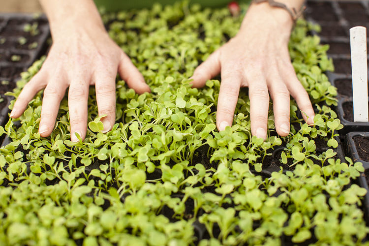 Close-up of hands and plants
