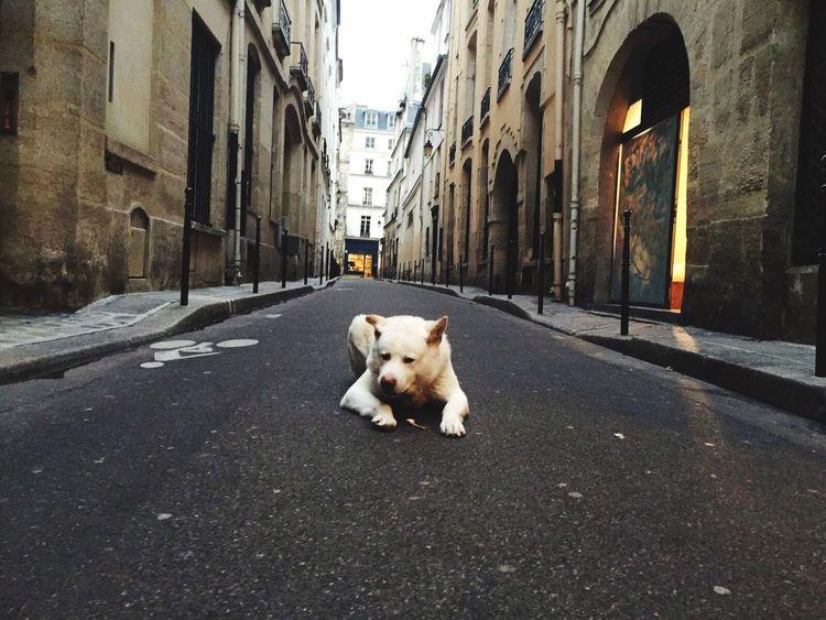 Showcase February: Showcase: February Dog Paris Paris ❤ Paris, France  Paris Je T Aime Hakitainu Hakita Inu Sense Streetphotography Street Photography Street Relaxing