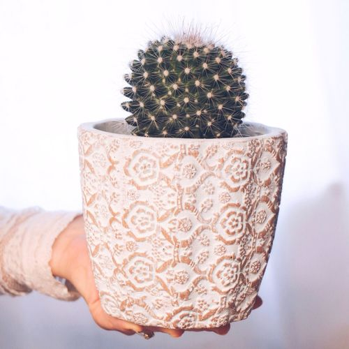 Cactus Thorn Spiked Human Hand Human Body Part Close-up Indoors  Real People Nature One Person People Day