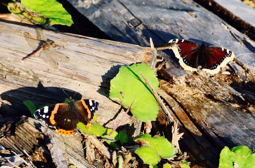 Day Wood - Material High Angle View Outdoors Animal Themes No People Insect Close-up Animals In The Wild Sunlight Nature