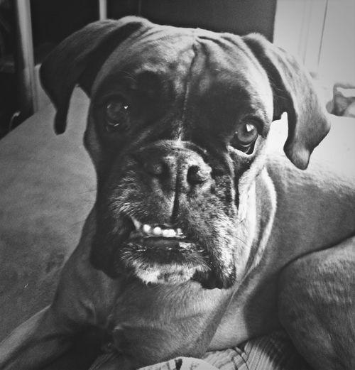 Mydog Ilovemydog