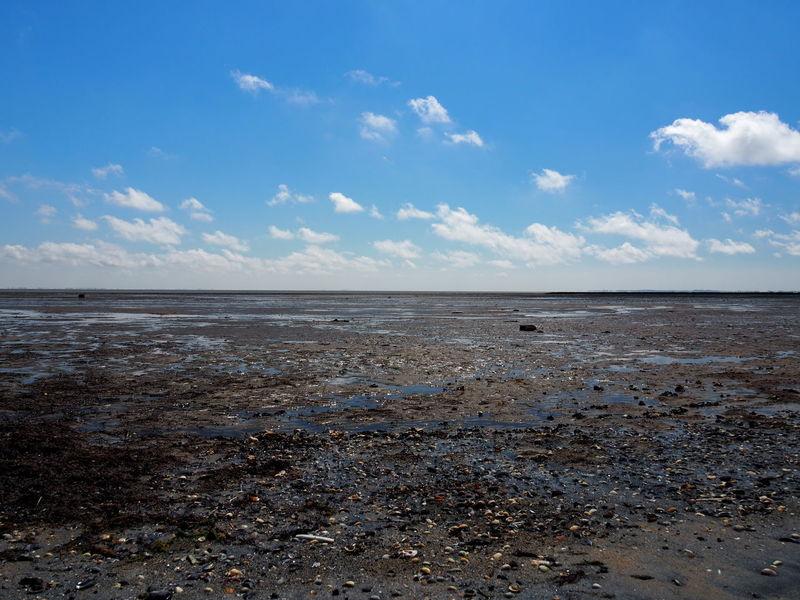 Sea Sky Cloud - Sky Horizon Over Water Blue Nature Beauty In Nature SandMud Flat No People Day Ebb Tide Ebb Mud Muddy Mudflat Mussels Horizon Shimmer