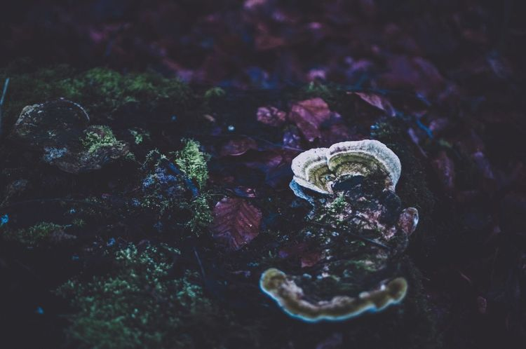 Forest Floor Forest Photography Nature Photography Nature_collection EyeEm Best Shots EyeEm Best Shots EyeEmNewHere Moodygram Moody Atmosphere Moody Nature Moodygrams Mushrooms First Eyeem Photo No People Nature Water Animal Themes Animals In The Wild Close-up Beauty In Nature One Animal Outdoors Day Sea Life Fragility