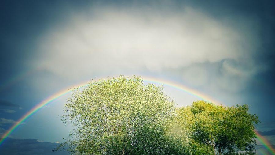 Sunlight streaming through trees against rainbow in sky