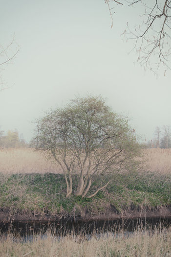 Little Tree at
