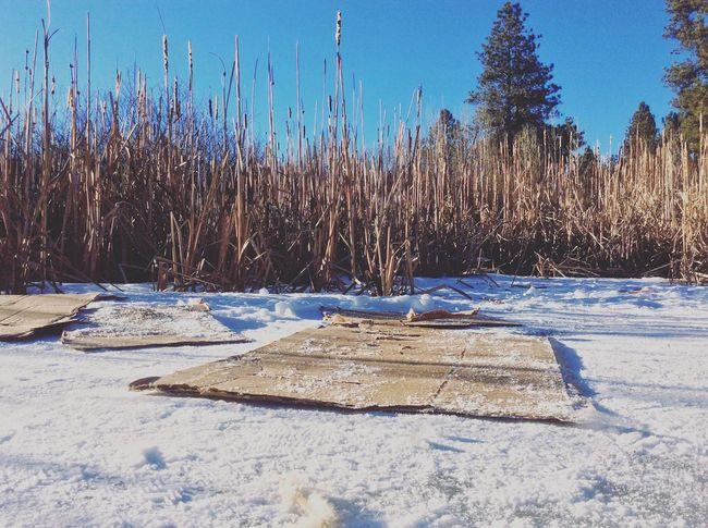 Economic Sledding Cardboard Shades Of Winter