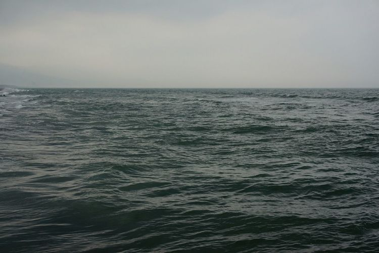 Seaside Enjoying Life Wavewhip Pacific Ocean Yilan, Taiwan 海