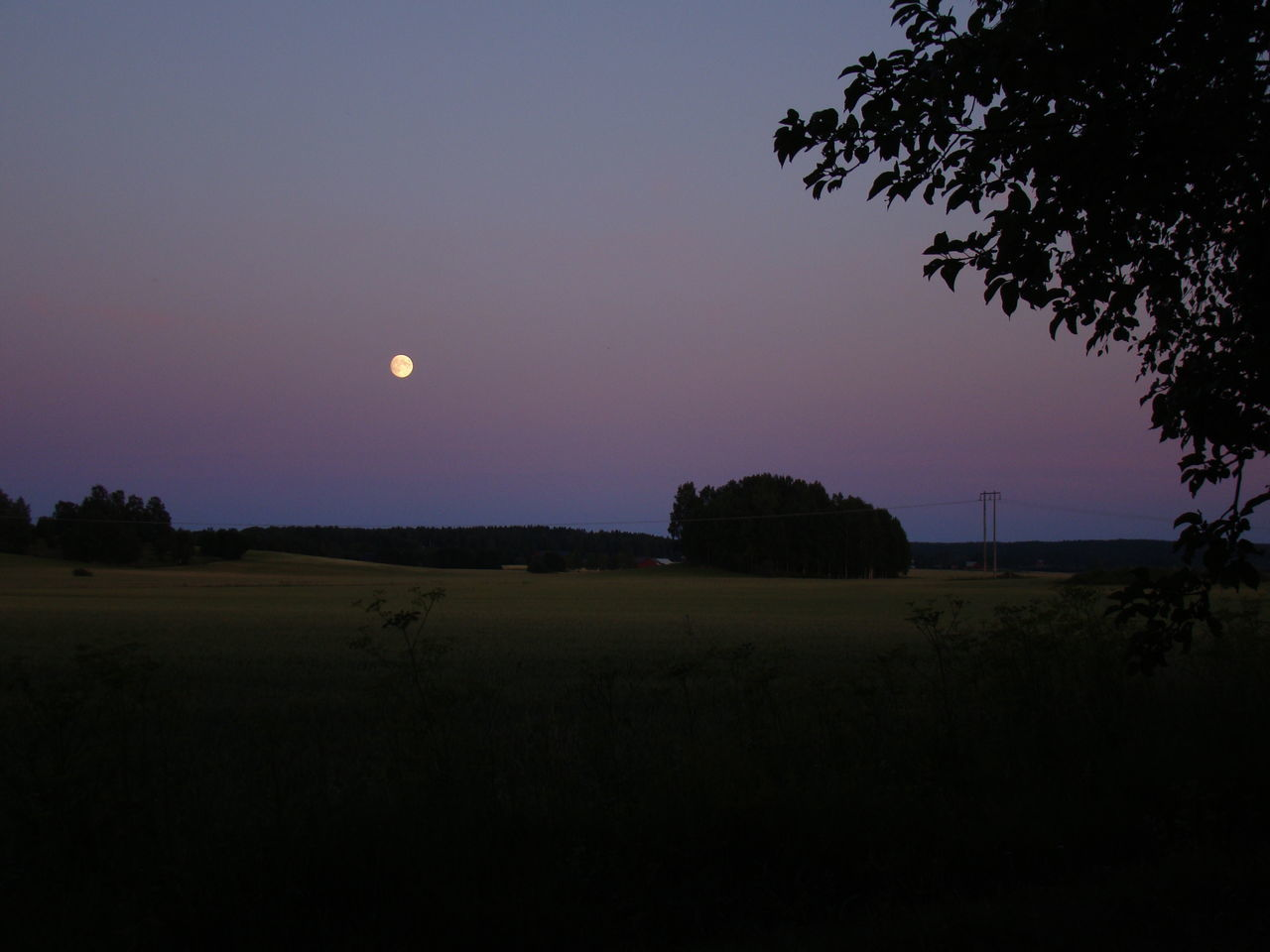 tree, moon, beauty in nature, nature, tranquil scene, no people, tranquility, field, scenics, sunset, silhouette, landscape, sky, outdoors, clear sky, growth, night, astronomy