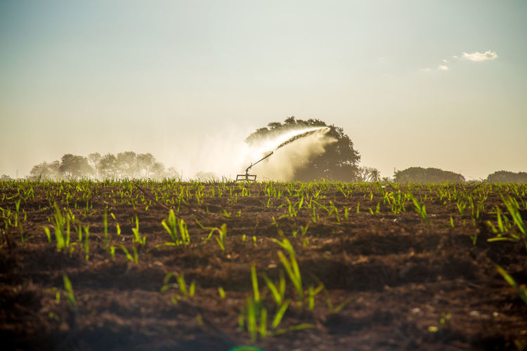 Agriculture Beauty In Nature Day Environment Farm Field Growth Irrigation Land Landscape Nature No People Outdoors Plant Plantation Rural Scene Scenics - Nature Sky Sugar Cane Field Sunlight Tranquil Scene Tranquility Water