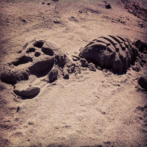 """Found"" a Dinosaur on the Beach . Paleontology Digging dinosaurbones bones sand newport oregoncoast sunshine TRex TyrannosaurusRex picoftheday childhood sandcastle"