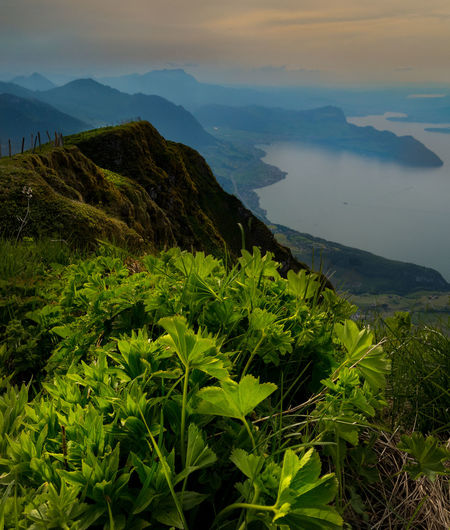 Beauty In Nature Day Environment Green Color Growth Idyllic Instagood Lake Land Landscape Mood Mountain Mountain Range Nature No People Non-urban Scene Outdoors Plant Scenics - Nature Sky Swiss Alps Tranquil Scene Tranquility Vierwaldstättersee Water