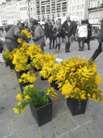 Flower Yellow Fragility Growth Built Structure Outdoors Day Flower Head Close-up Canon Photography Ruepietonne Streetphotography_bw Adapted To The City Urbanphotography Marseillecartepostale📮 Marseilleinsolite Marseillerebelle Urban Exploration Streetphotography Marché Aux Fleurs Mimosa Flowers Mimosas Jaune🌻 Bnw_collection Eyeemphoto