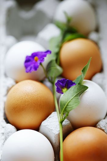 Close-up of brown and white eggs with purple flower